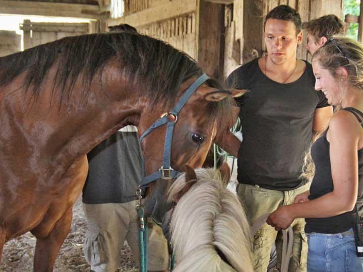 Pferdefreundschaft am Set