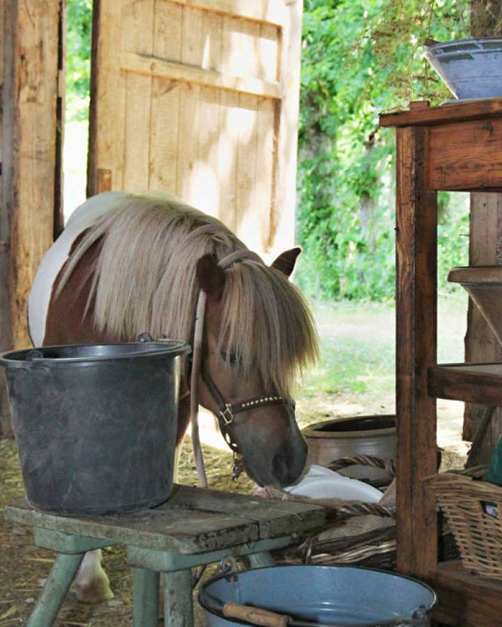 Pony Jonny von Immenhof