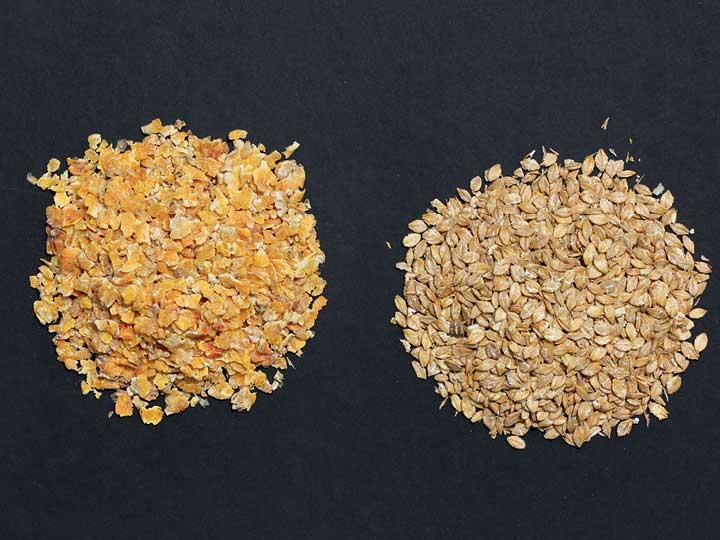Wie Haferflocken im Müsli für Menschen bilden Mais- und Gerstenflocken die Grundlage eines Pferde-Müslis.