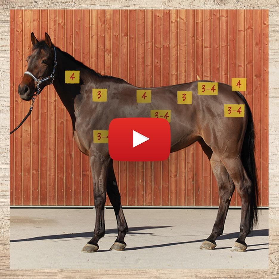 Body Condition Score – Video 1